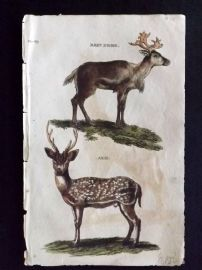 Brightly (Pub) 1811 Antique Hand Col Print. Reindeer, Axis